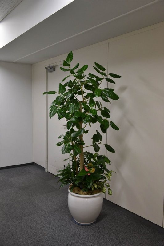 オフィス ウエルカムグリーン(大阪市北区)